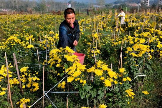 江西万载县加大种植业结构调整力度