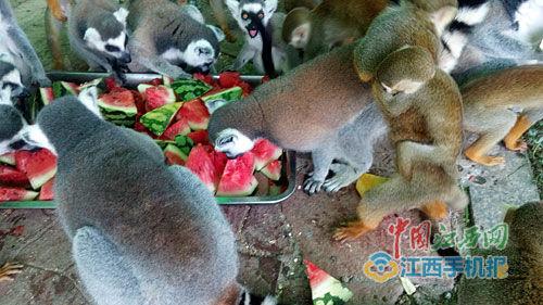 """防暑有妙招 南昌动物园为各种动物定纳凉""""套餐"""""""